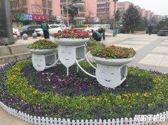 鲜花盛开迎新春 公园活动呈精彩