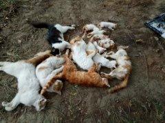 一夜之间 三门峡一小区几十只猫狗莫名死亡