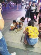 网传郑州女子街头遛蜥蜴被抓? 事实果真如网传的那样?